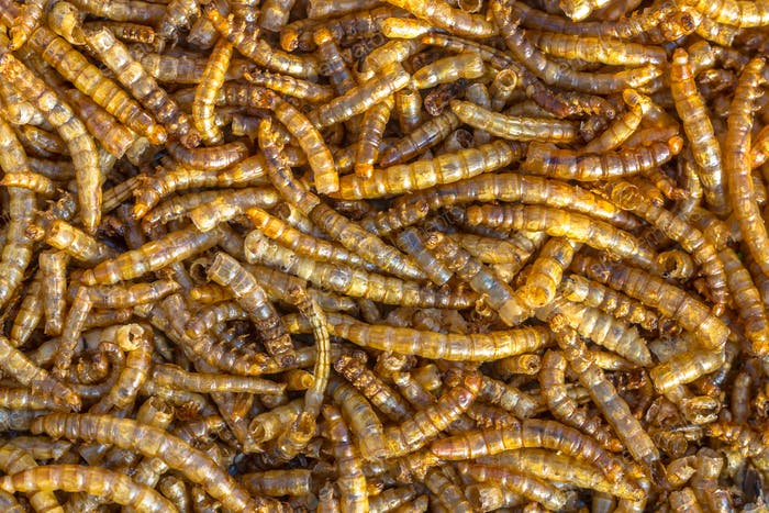 Dried mealworm background