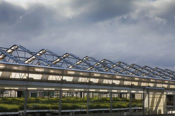Gewächshaus, großes Gebäude für die Anzucht von Pflanzen, Gartenbau