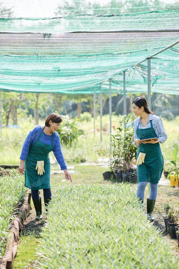 Farmers working in greenhouse