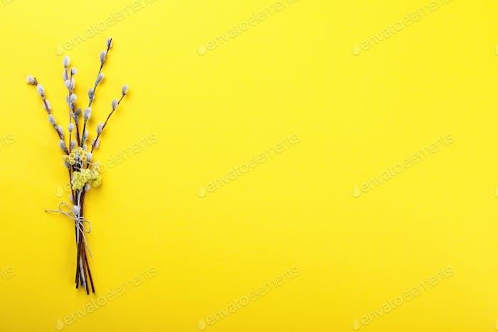 Easter background. Bouquet of Willows on a yellow paper.