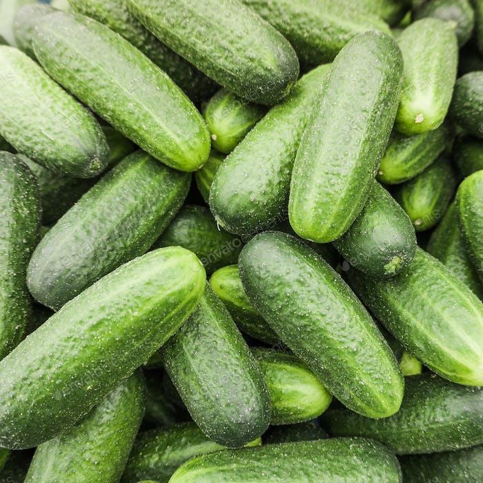 fresh cucumber.  Cucumber background