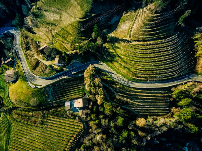 Aerial view of landscape with terraces green vineyard in Italy