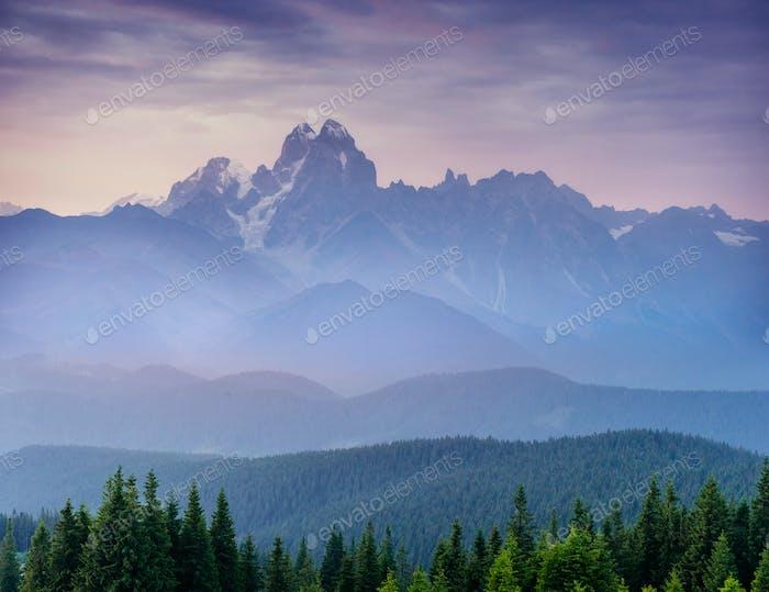Pine tree forest. Beauty world. Carpathians Ukraine Europe