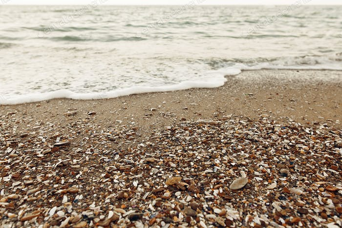 Sandy beach with shells, stones and waves