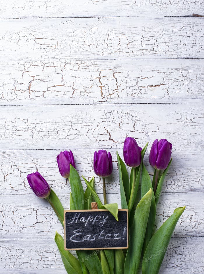 Easter background with tulip flowers