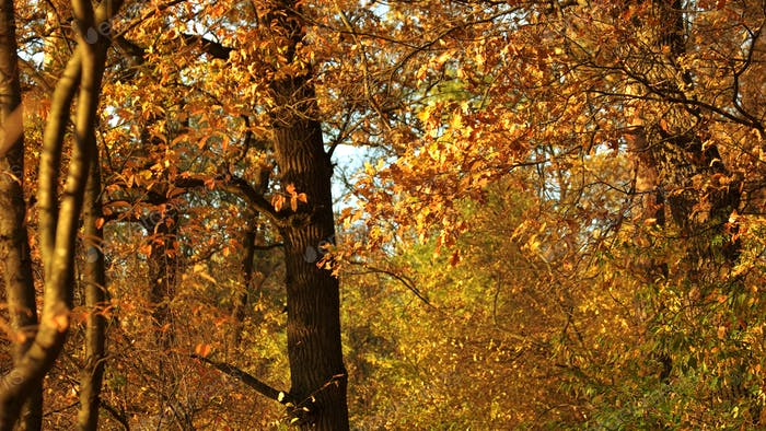 Autumn nature in forest.