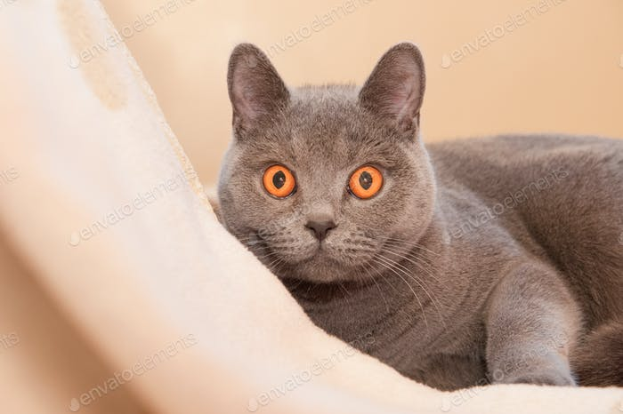 gato hipnótico
