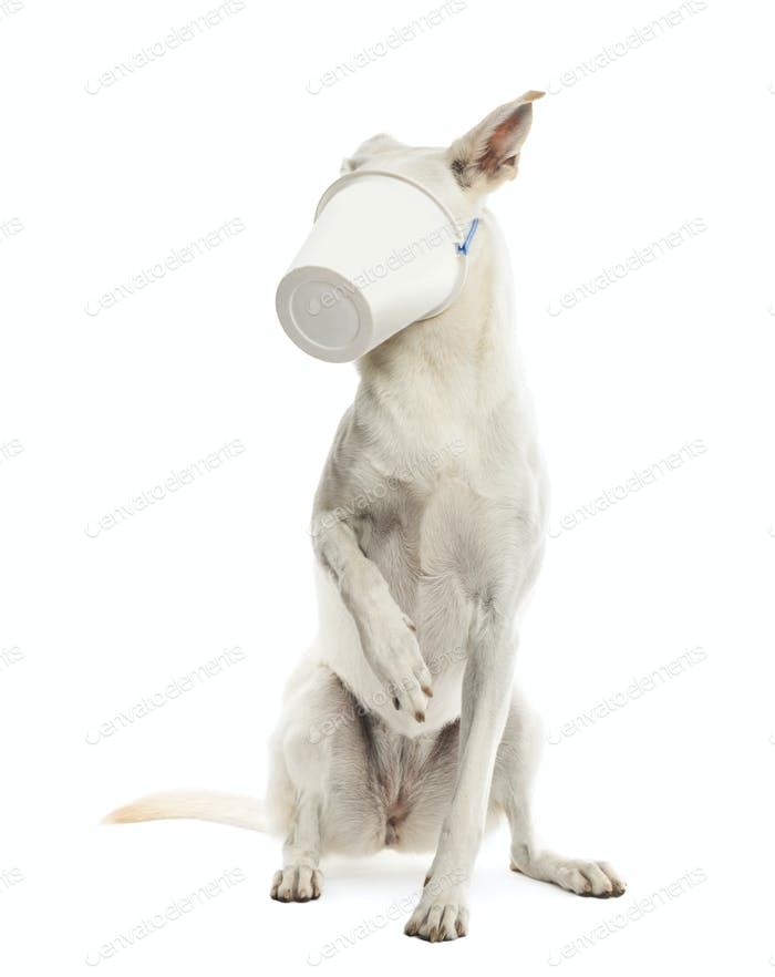 Crossbreed dog sitting with plastic bucket on its face against white background
