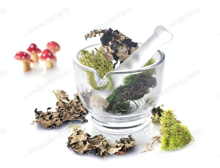 mortar and moss