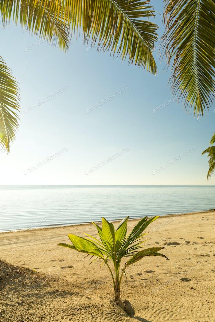 Fresh Palm Tree Growing