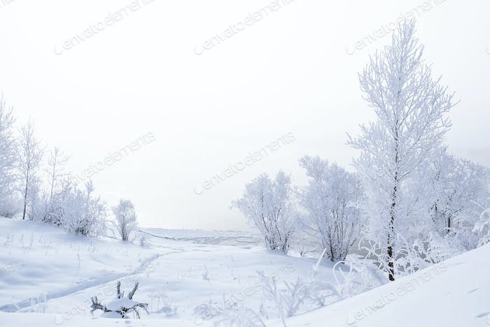 Winter landscape. Trees and bushes with hoarfrost