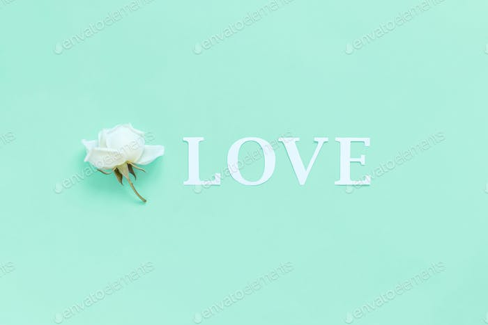 Blume und Wort LIEBE auf hellgrünem Hintergrund