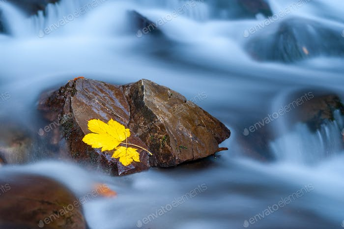 Yellow leaf on a stone in near of a waterfall