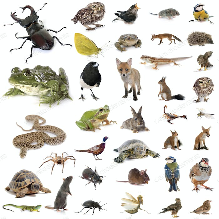 european wildlife in studio