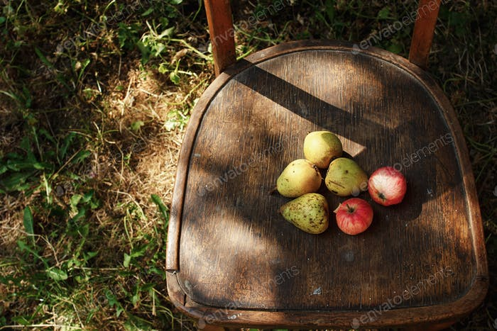 tasty fruits from garden  on rustic old wooden chair under soft sunlight