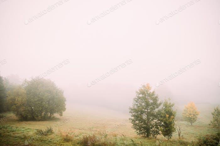 Misty Landscape. Morning Fog Over Misty Meadow. Autumn Nature Of