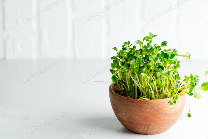 Home grown fresh organic microgreen in a wooden bowl on a light grey background. Close-up view