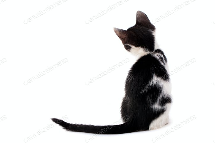 Young black and white kitten