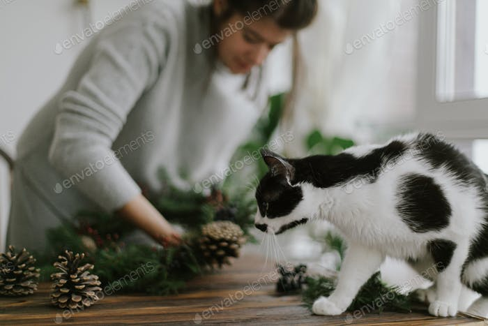 Making christmas wreath with cute cat, holiday advent. Adorable feline helper, happy holidays