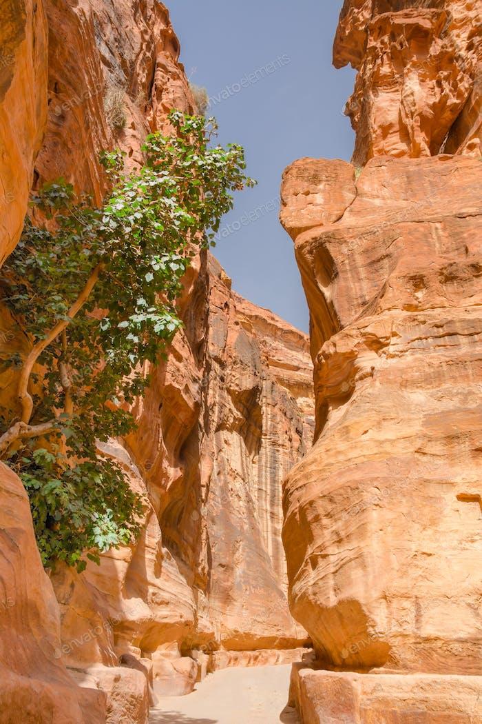 die Siq Canyon. Petra, Jordanien Land