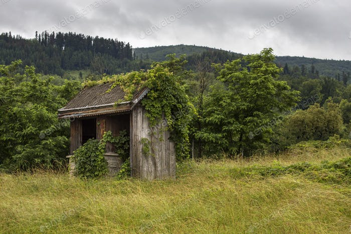 Old abandoned barn on the edge of the forest