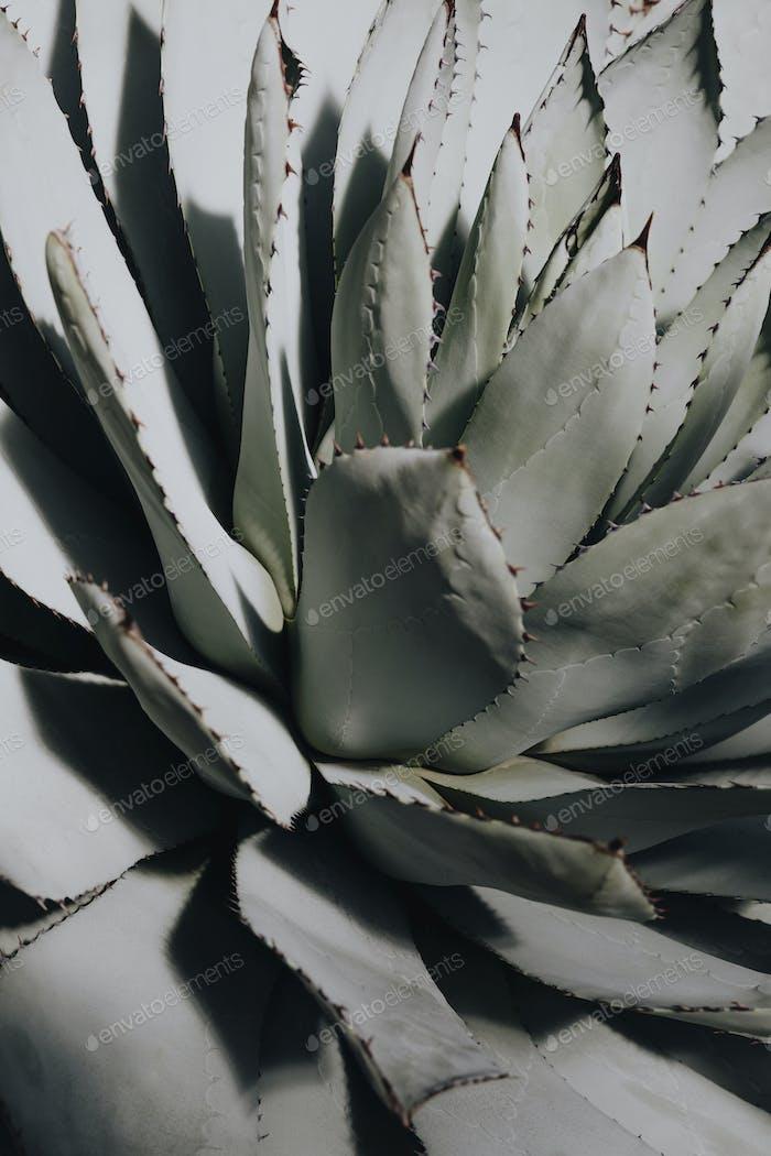 Desert succulent plant