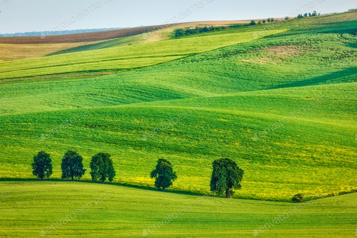 Rolling landscape of South Moravia with trees
