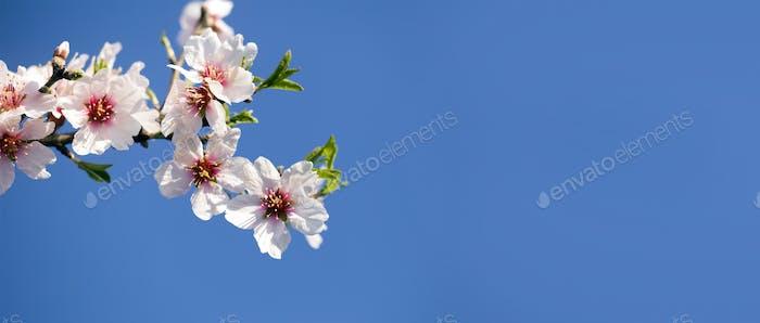Spring, springtime - pink flowers