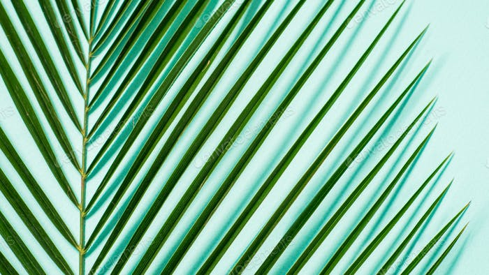 Palm leaves on pastel blue background, copy space