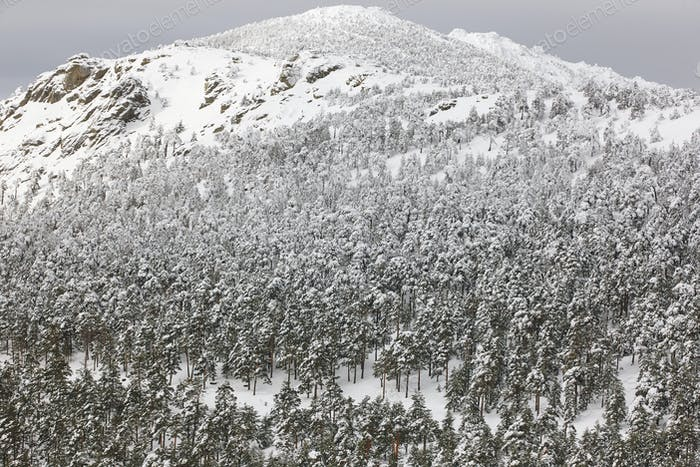 Winter mountain forest snowy landscape. Navacerrada, Spain. Horizontal