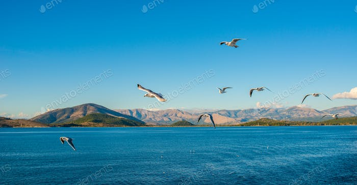 Seagulls flying above Ionian sea