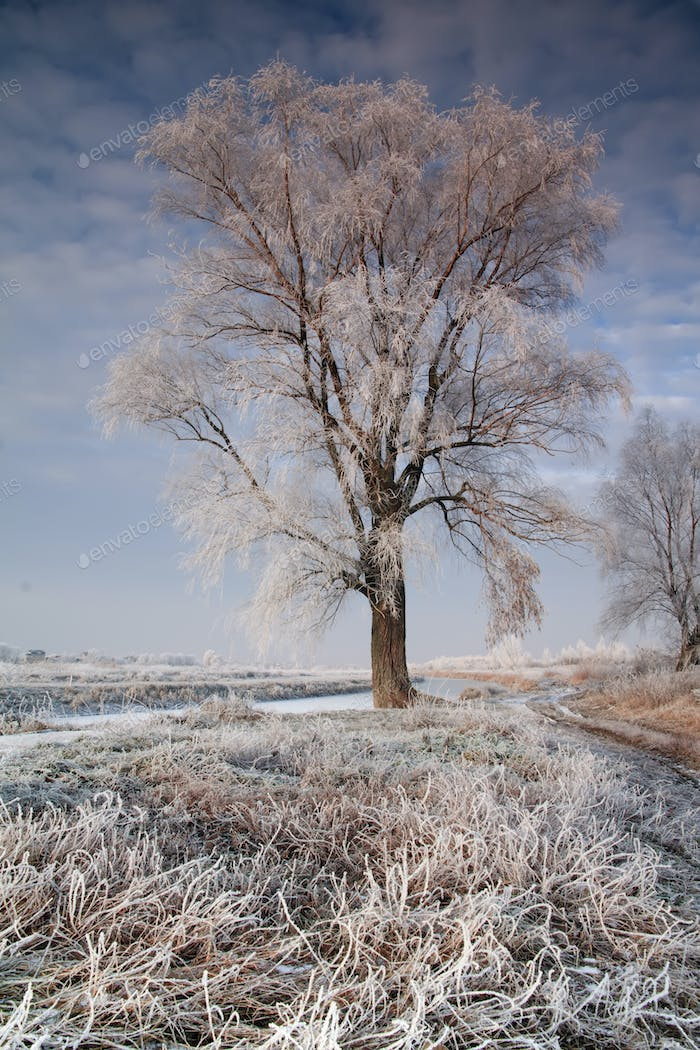 Beautiful trees in hoarfrost against the blue sky. Winter landscape