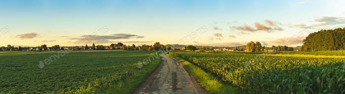 Beautiful landscape with road, green corn fields and sunset sky