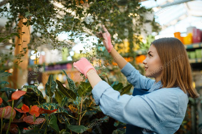 Female seller spraying plants, shop for gardening