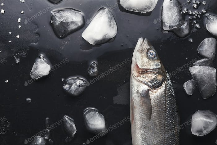 Fresh sea bass at black background