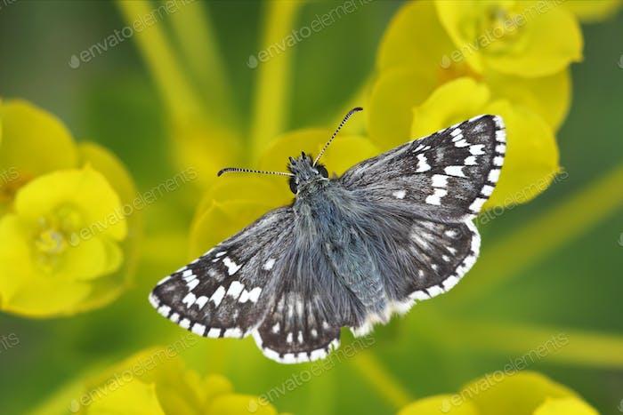 Hermosa mariposa sentado en flores amarillas