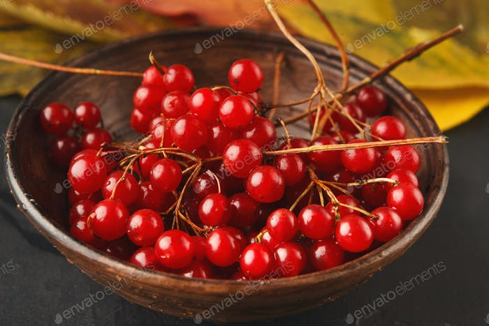 Ripe red berries of a viburnum in a plate