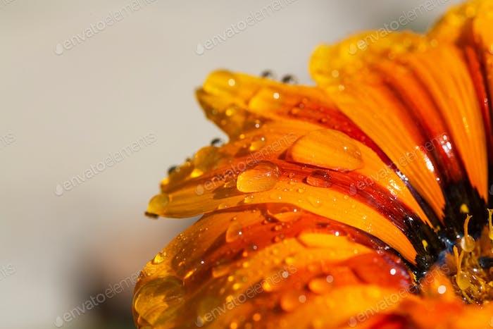 Nasse Blume