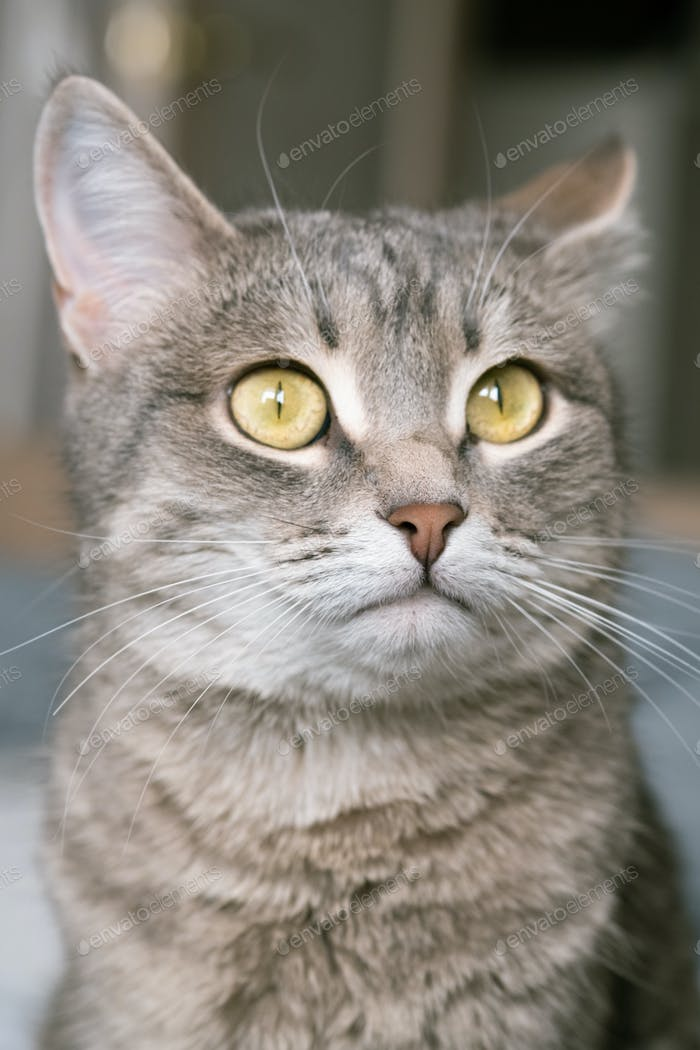 A striped gray cat with yellow eyes.