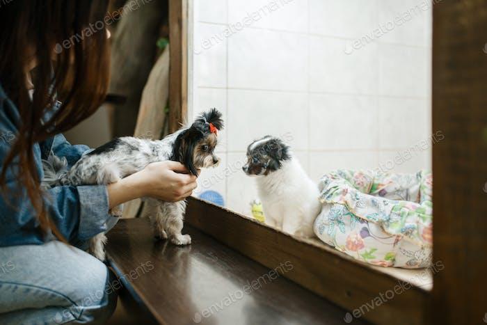Kleines Mädchen zeigt Welpen zu ihrem Hund, Tierhandlung