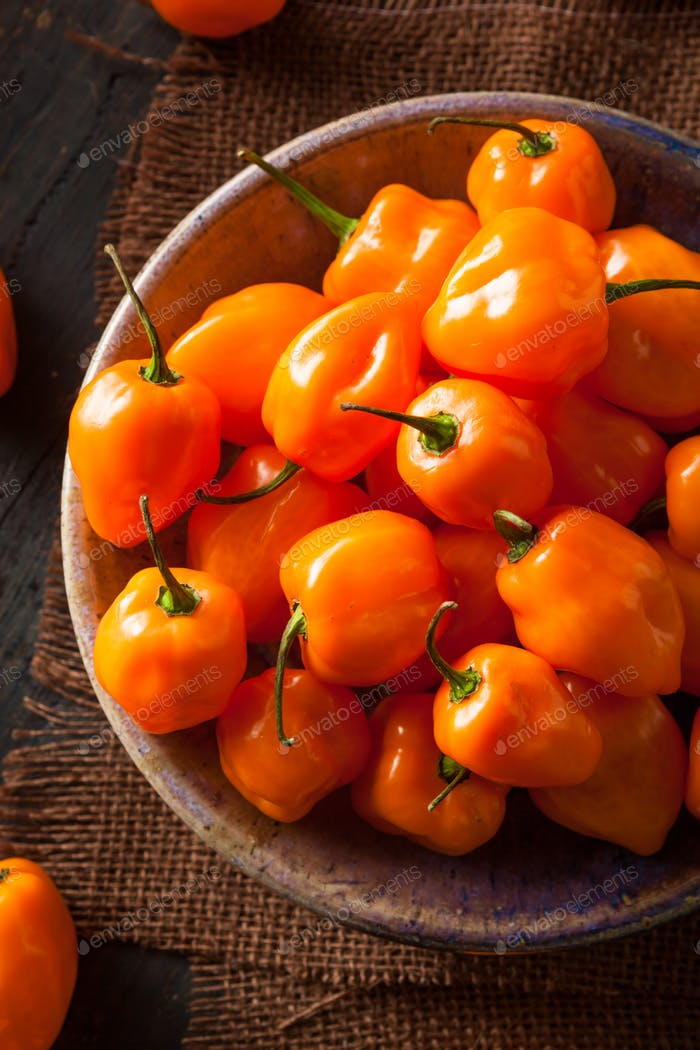 Raw Organic Orange Habanero Peppers