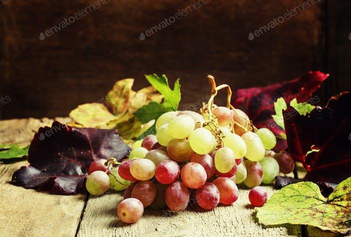 Autumn grape