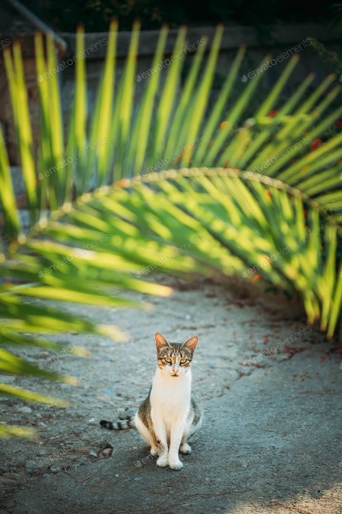 Funny Young Cat Sitting Under Palm Branches In Summer Garden