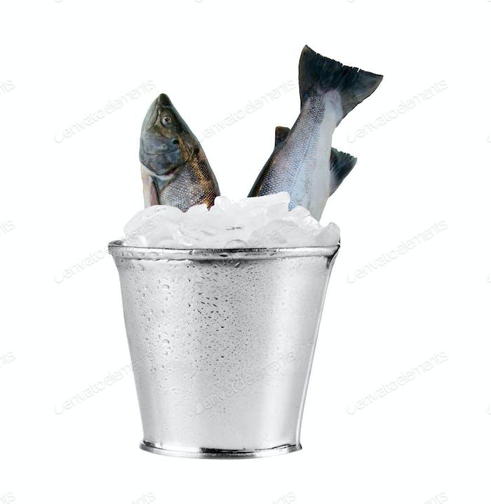 raw fish isoalated