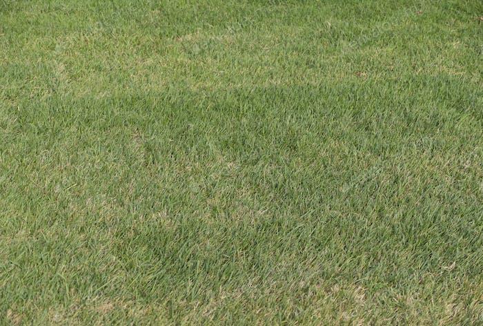 Lush green grass on the soccer field