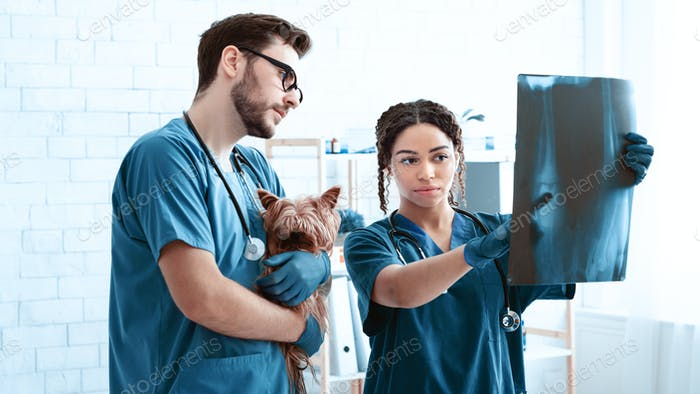 Animal radiography. Professional vet doctor and nurse with cute dog studying xray at clinic