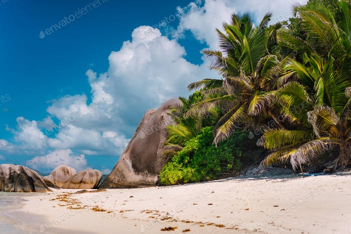 Palm tree at famous paradise Anse Source d'Argent beach at La Digue, Seychelles