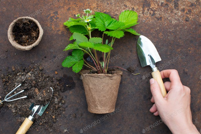 Organic farming concept, garden tools and plant
