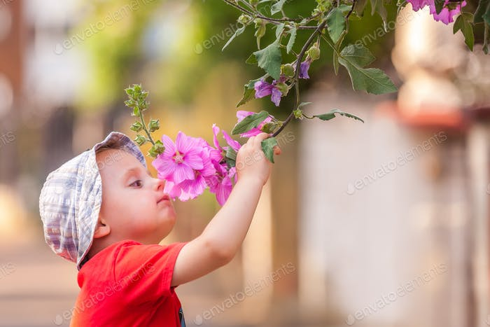 Little boy smelling flowers