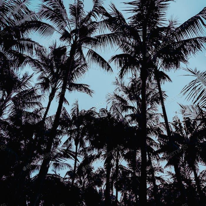 Palms Minimal art design Print style